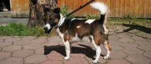 Oskar Tierheimhund